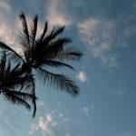 Teens Cook–Hawaiian Luau